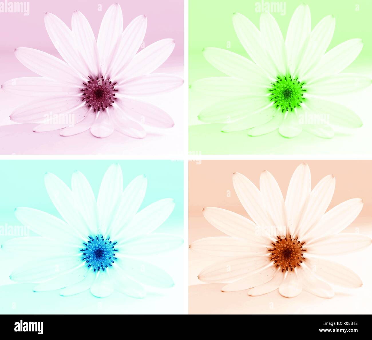 African Daisy Art - pastel grid of flowers - Stock Image
