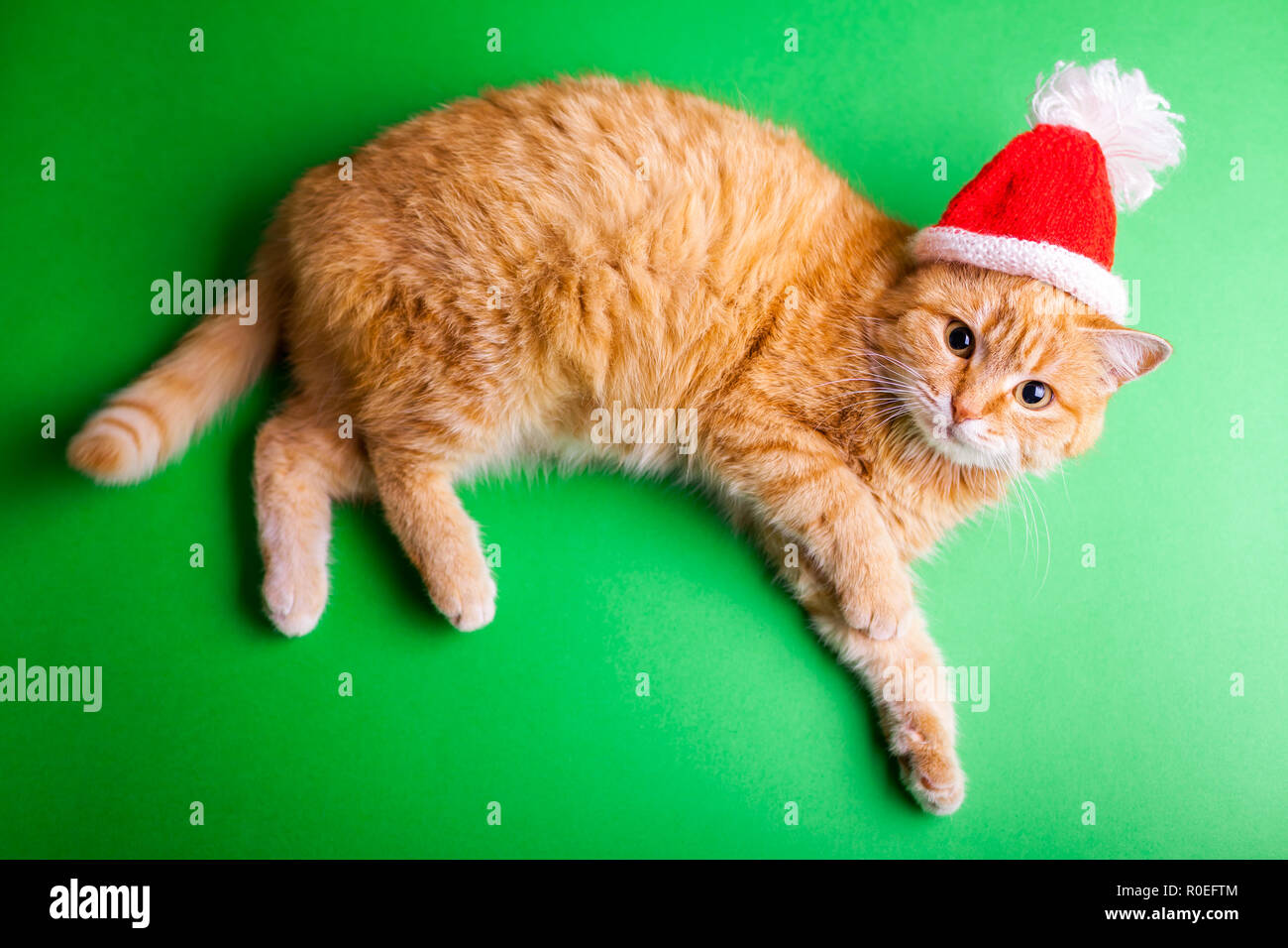 Red cat wears red Santa's hat on green background. Christmas and New year concept - Stock Image