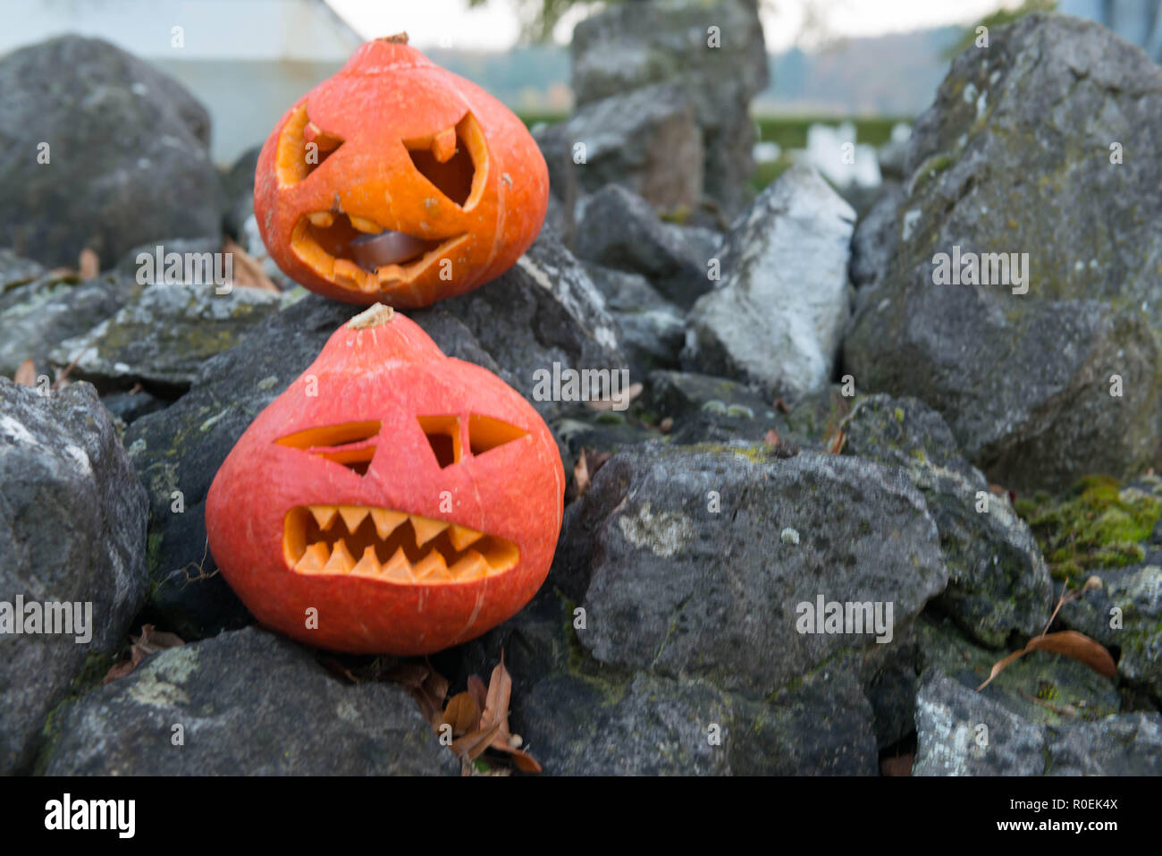Two carved pumpkings on rocks for Haloween celebration Stock Photo