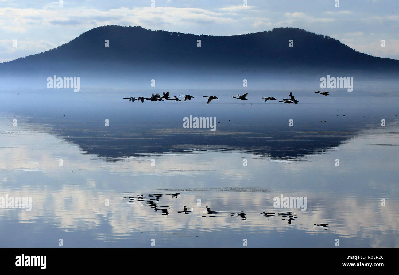 Rongcheng, China's Shandong Province. 4th Nov, 2018. Swans fly over a lake in Rongcheng, east China's Shandong Province, Nov. 4, 2018. Credit: Wang Fudong/Xinhua/Alamy Live News - Stock Image