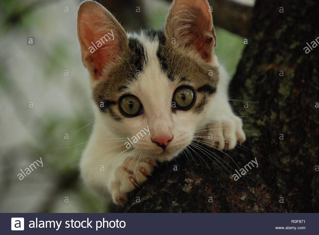 Kitten in tree - Stock Image