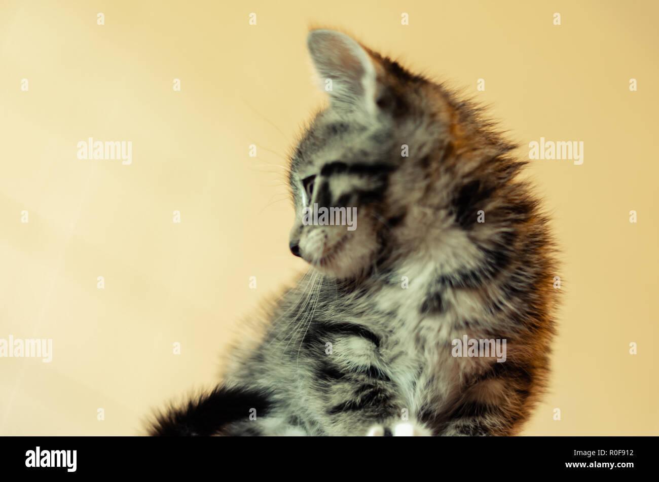 Little kitten ,little cat - Stock Image