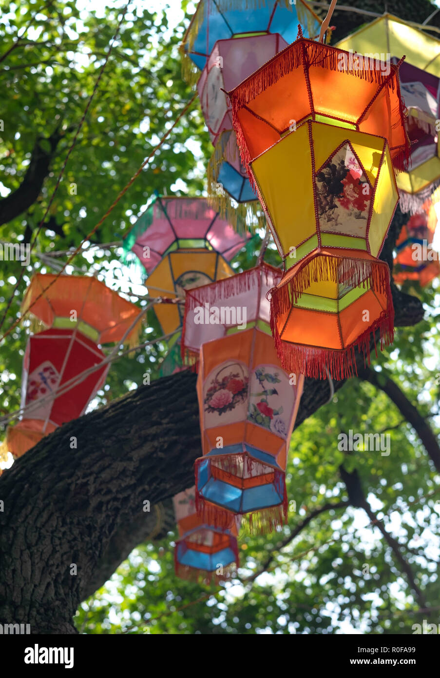 Huge Tree Being Decorated With Lots Of Lanterns Hanging On The Branches Multicolor Chinese Lantern Hanging With Trees In The Background Stock Photo Alamy