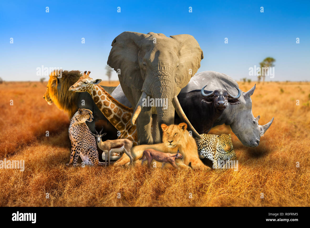 Big Five And Wild African Animals Composition On Savannah