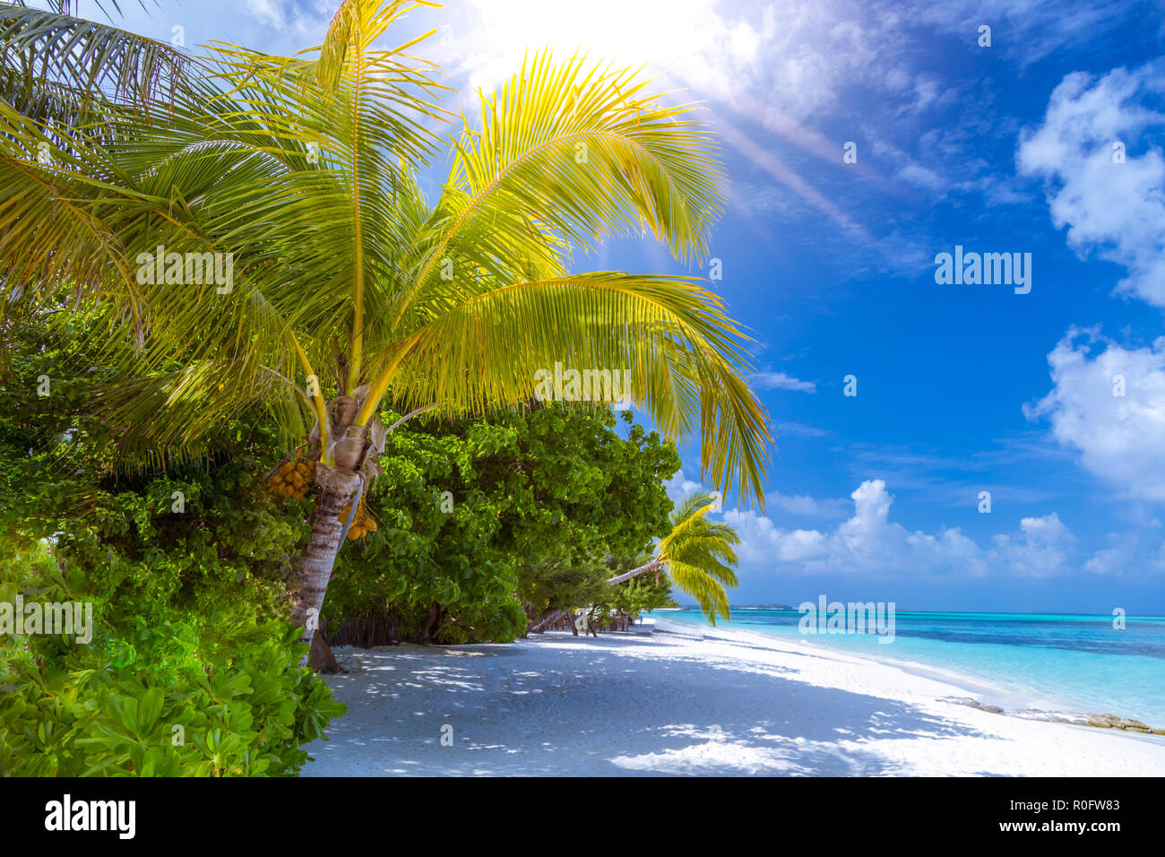 Tranquil Beach Scene Exotic Tropical Beach Resort Landscape For