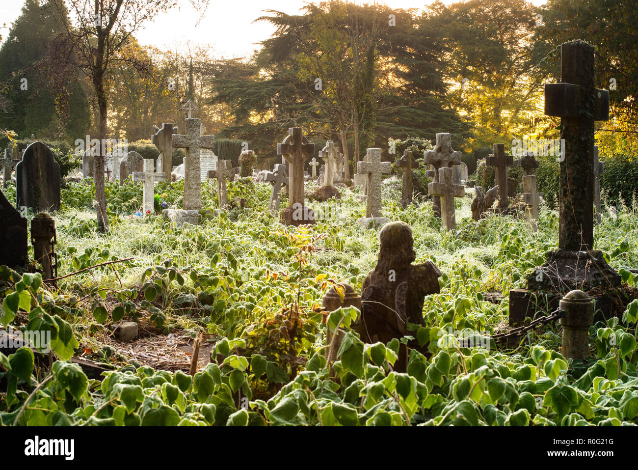 Early morning frost, Southampton Old Cemetery - Stock Image