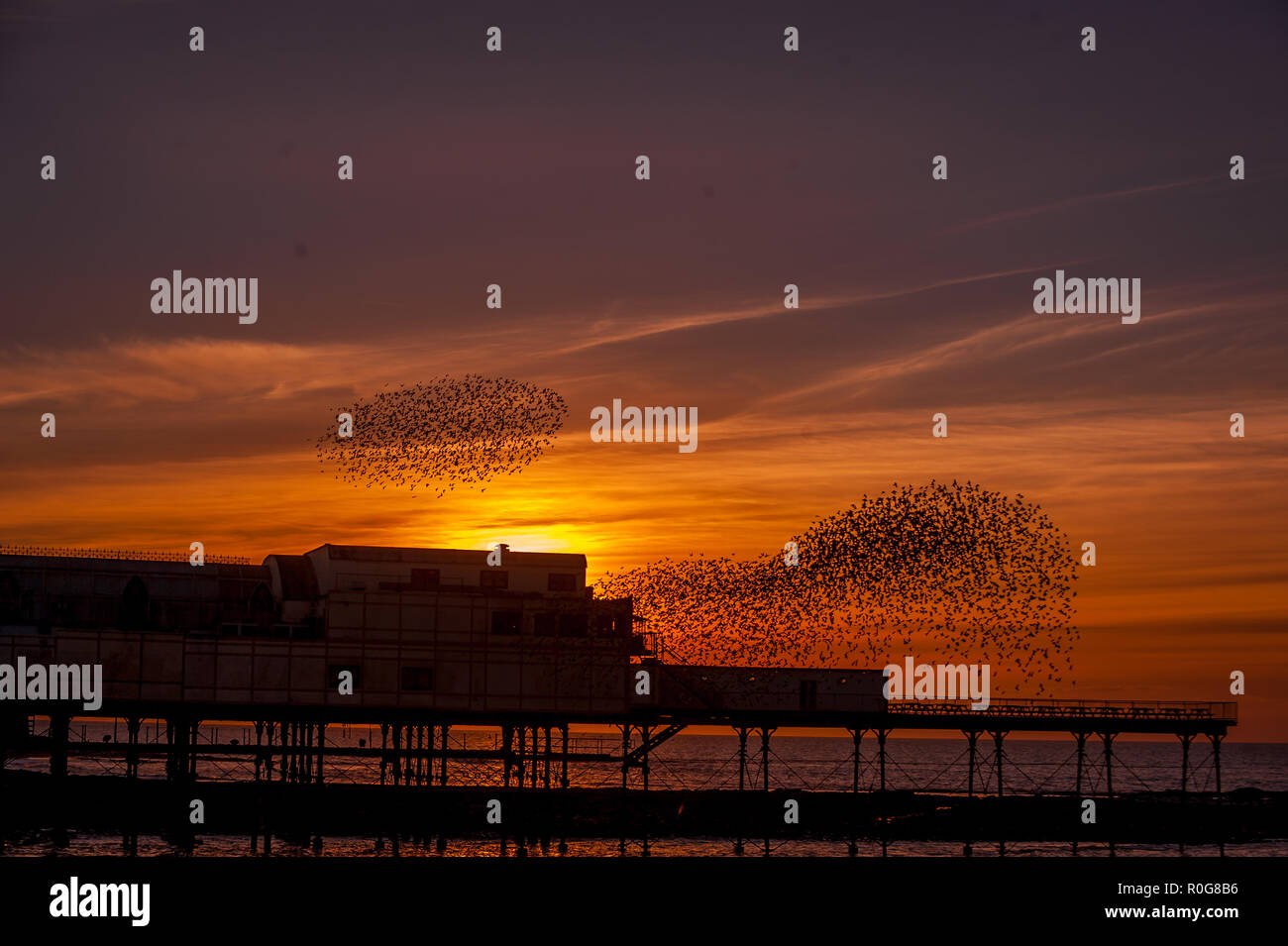 A murmuration of Starlings fly over the pier in Aberystwyth, Ceredigion West Wales. - Stock Image