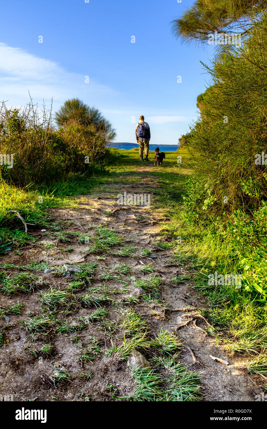 Overtourism hiker and dog on coastal path showing environmental damage, ground and soil erosion exposing tree roots on Instagram famous coastal path. - Stock Image