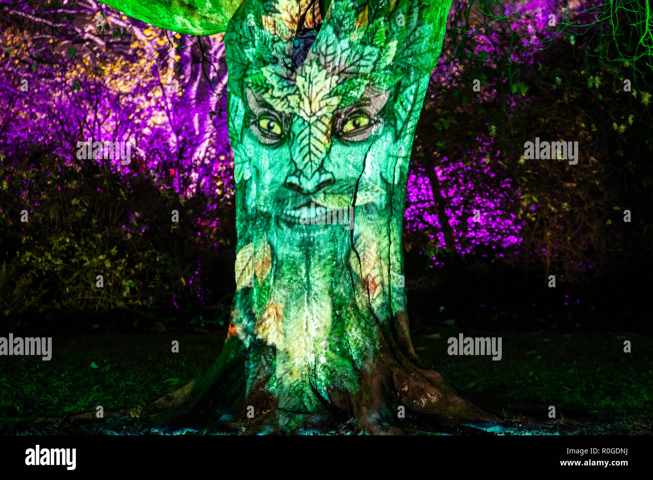 Spooky face projected onto a 'talking' tree at GlasGLOW, where the Botanic Gardens are lit up at night. - Stock Image