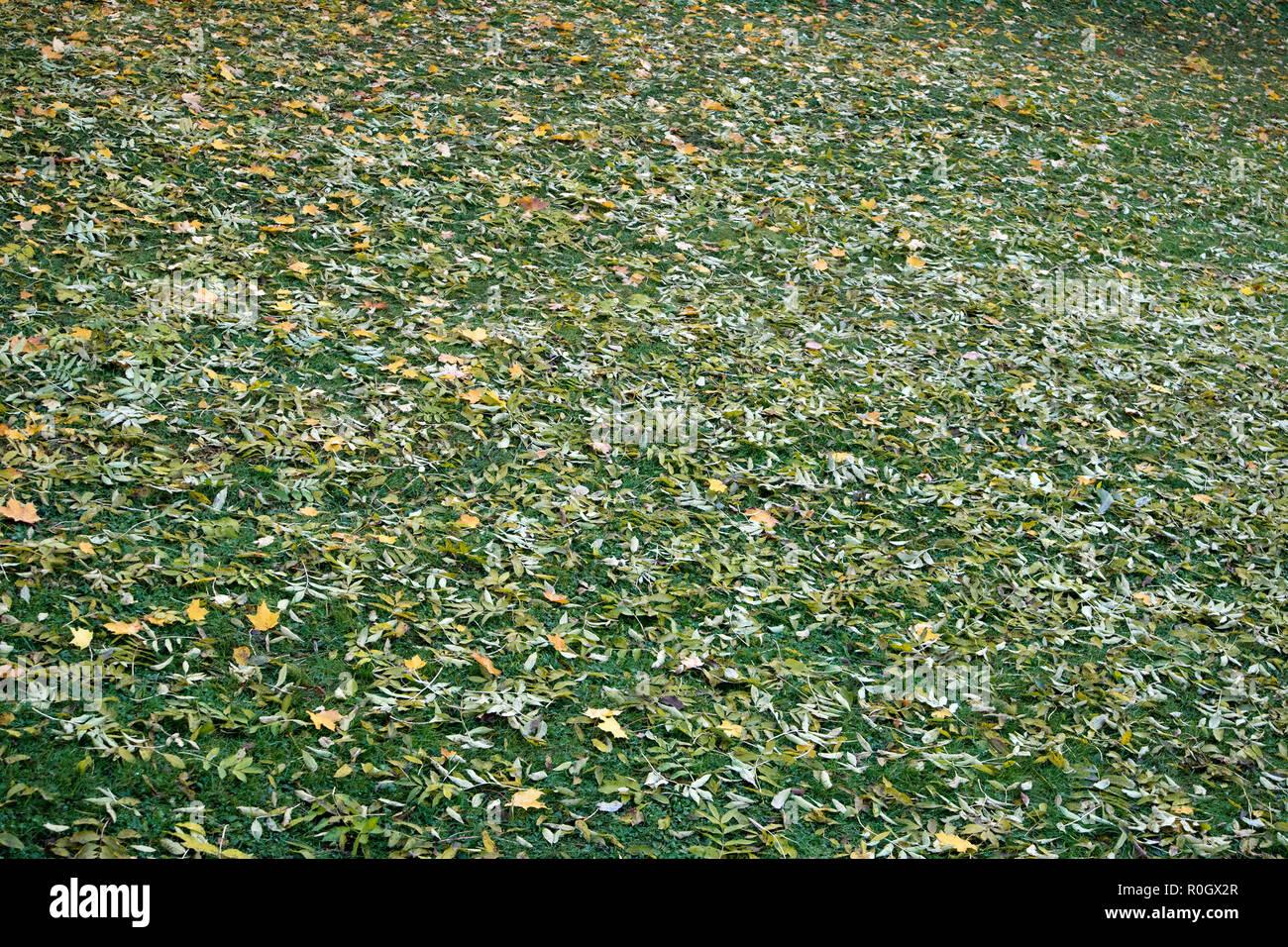 Leaf Lying On Lawn Stock Photos Amp Leaf Lying On Lawn Stock