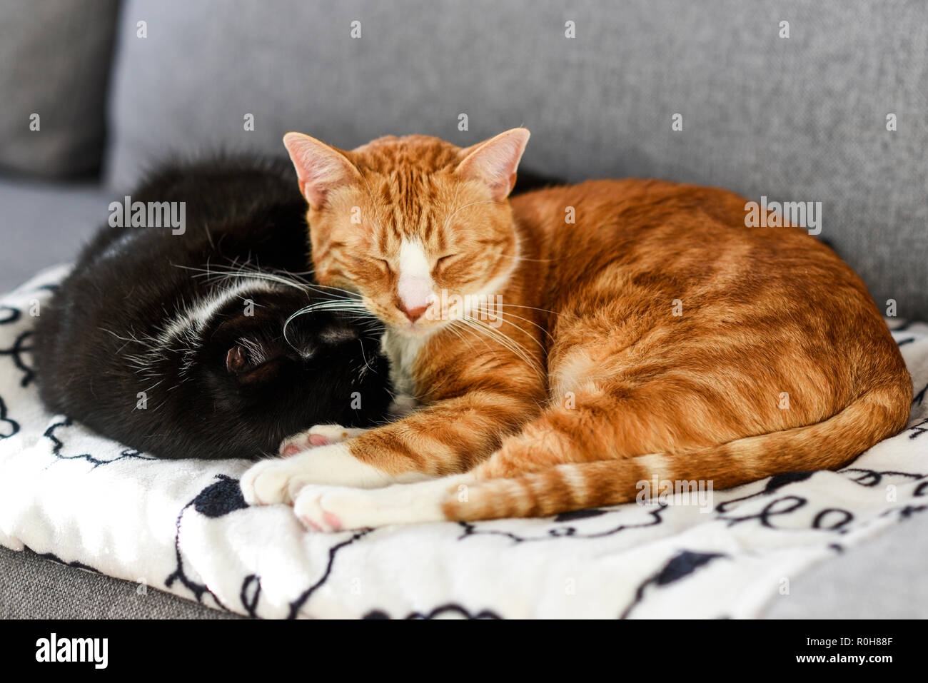 Two cats sleeping and cuddling on the sofa at home. - Stock Image