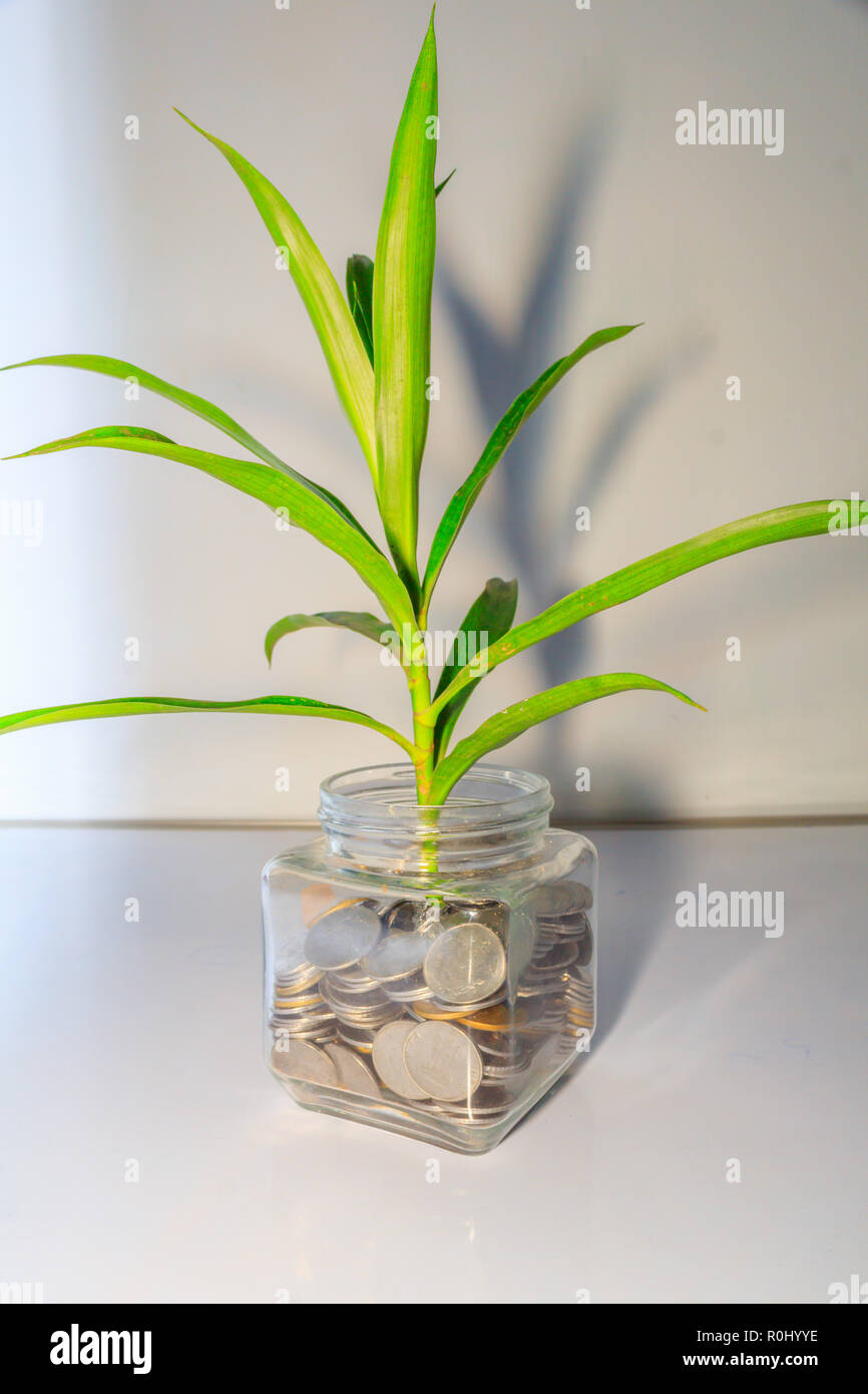 Plant growing out of coins in a glass jar. Business Money growth concept. Little green tree leaf grow  coins in bottle container with white background - Stock Image
