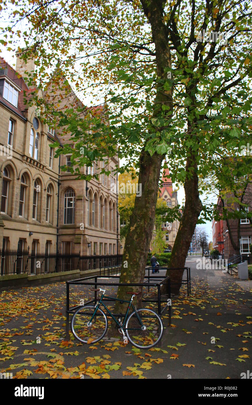 Racing bicycle and old tree in autumn fall with a an old building in the background - Stock Image