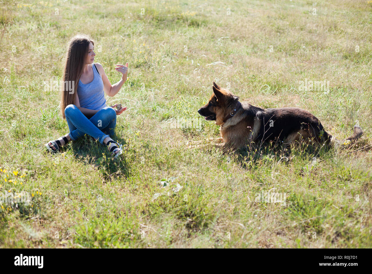 female schools and plays with dog Shepherd - Stock Image