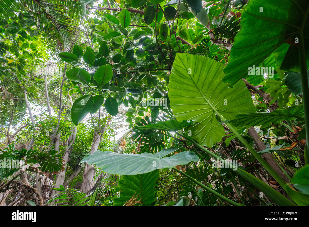 Tropical Plants In Forest Or Jungle / Rainforest Landscape