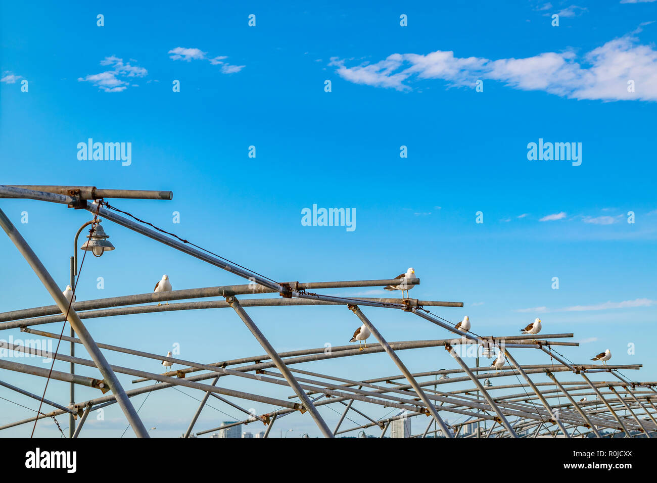 Seagulls standing at iron structure at port of punta del este city, Uruguay - Stock Image