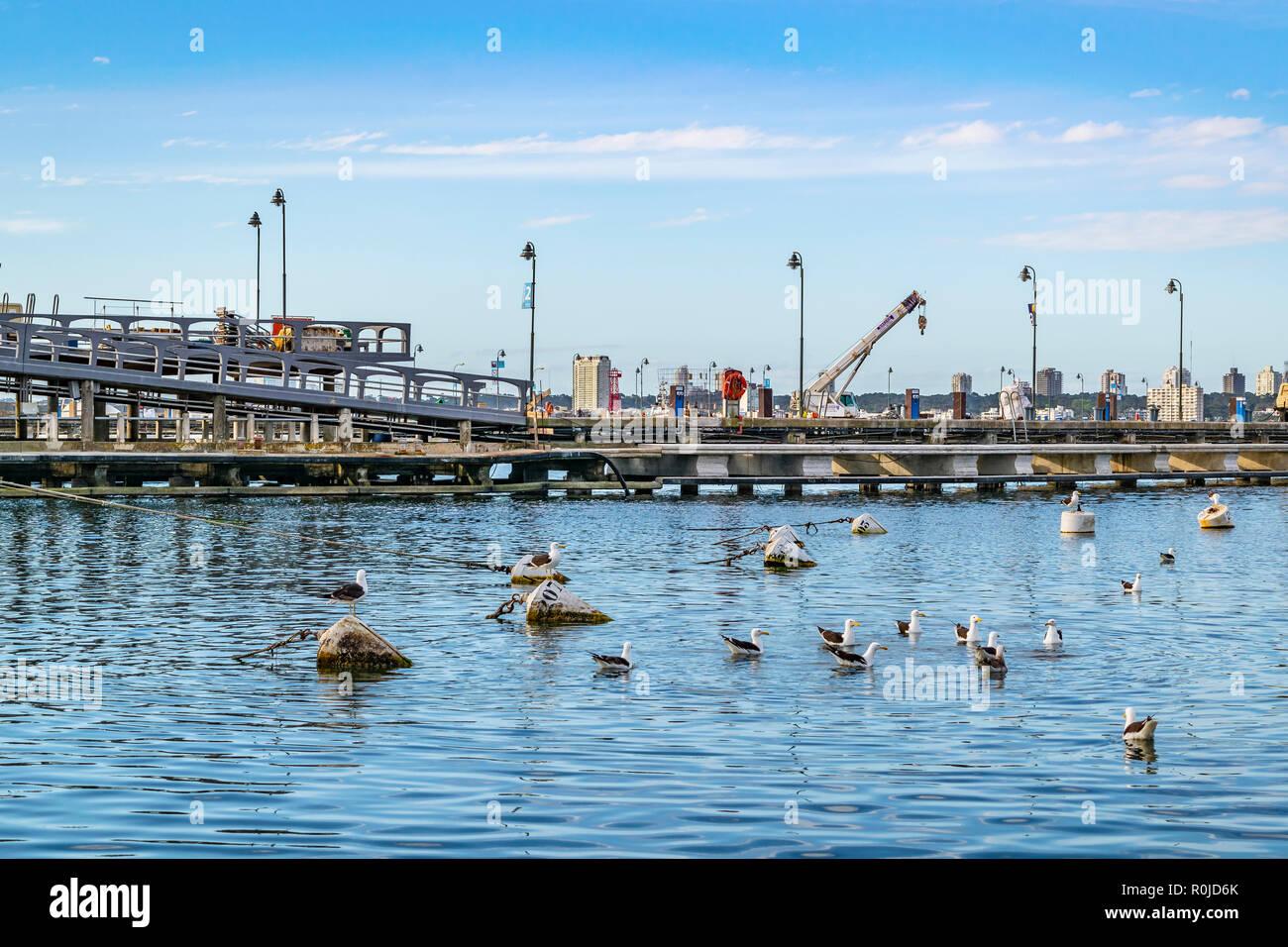 PUNTA DEL ESTE, URUGUAY, OCTOBER - 2018 - Winter day scene at port in punta del este city, Uruguay - Stock Image