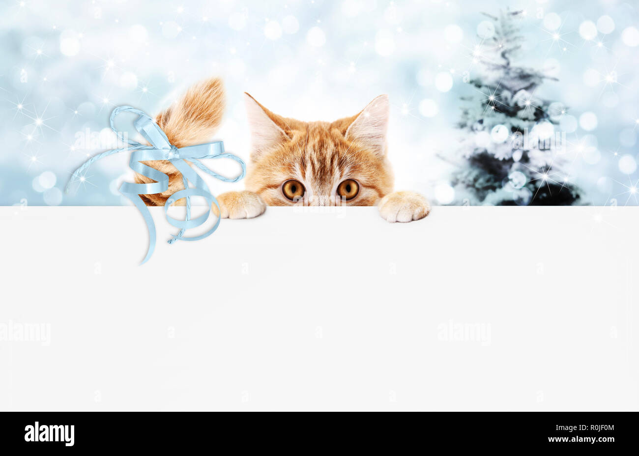 christmas ginger cat gift card with tree and blue ribbon bow, copy space template - Stock Image