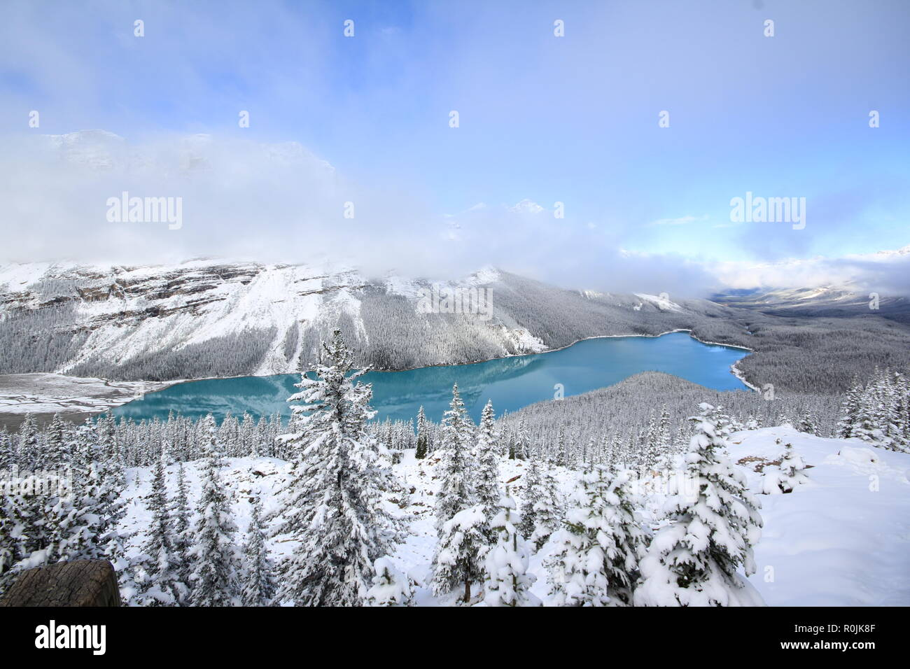 Spectacular winter scene at Peyto Lake in Banff National Park, Canada, with mountains and trees covered by snow.  Image of popular tour attraction. - Stock Image