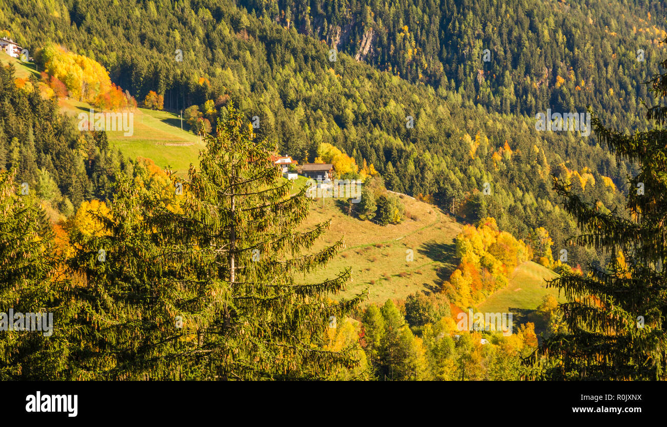autumn landscape in Gardena Valley with a trees in autumn colors. Location National Park Dolomiti, South Tyrol, province of Bolzano, Italy, Europe - Stock Image