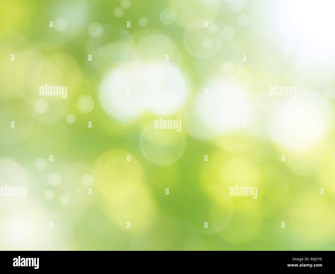 Fresh green spring blurred background - Stock Image