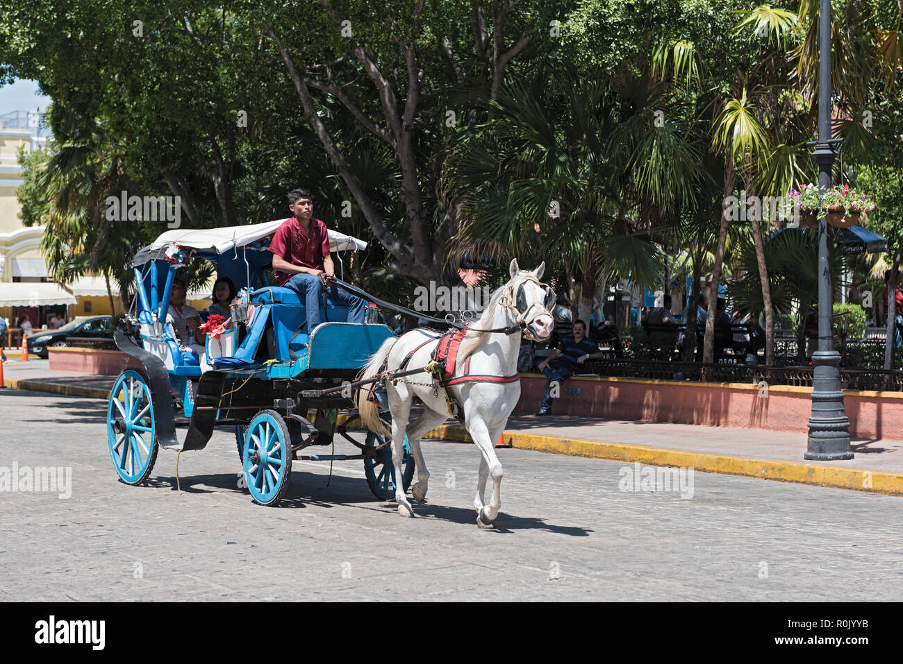 blue horse drawn carriages on a city street in front of the plaza grande square in merida, mexico. - Stock Image