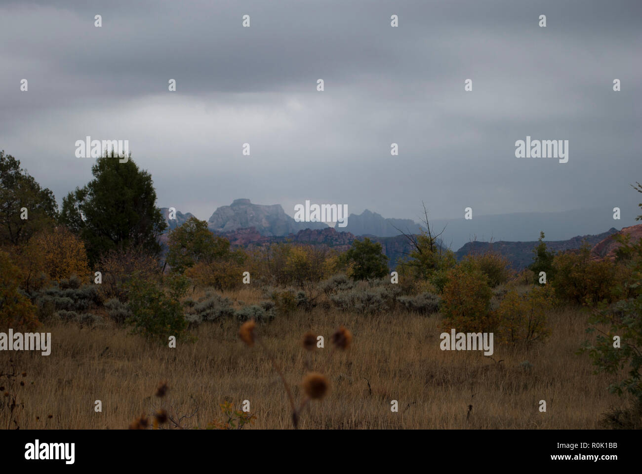 Rainy foggy day at mountains landscaped valley in autumn. Red, yellow colors of fall - Stock Image