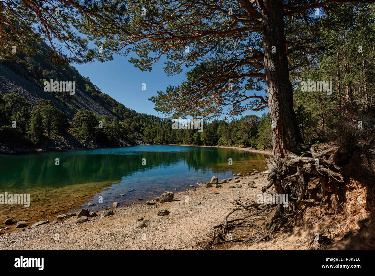 The Green Lochan (An Lochan Uaine). A small but incredibly beautiful Loch near Glenmore Lodge in Glenmore in The Cairngorms. Stock Photo