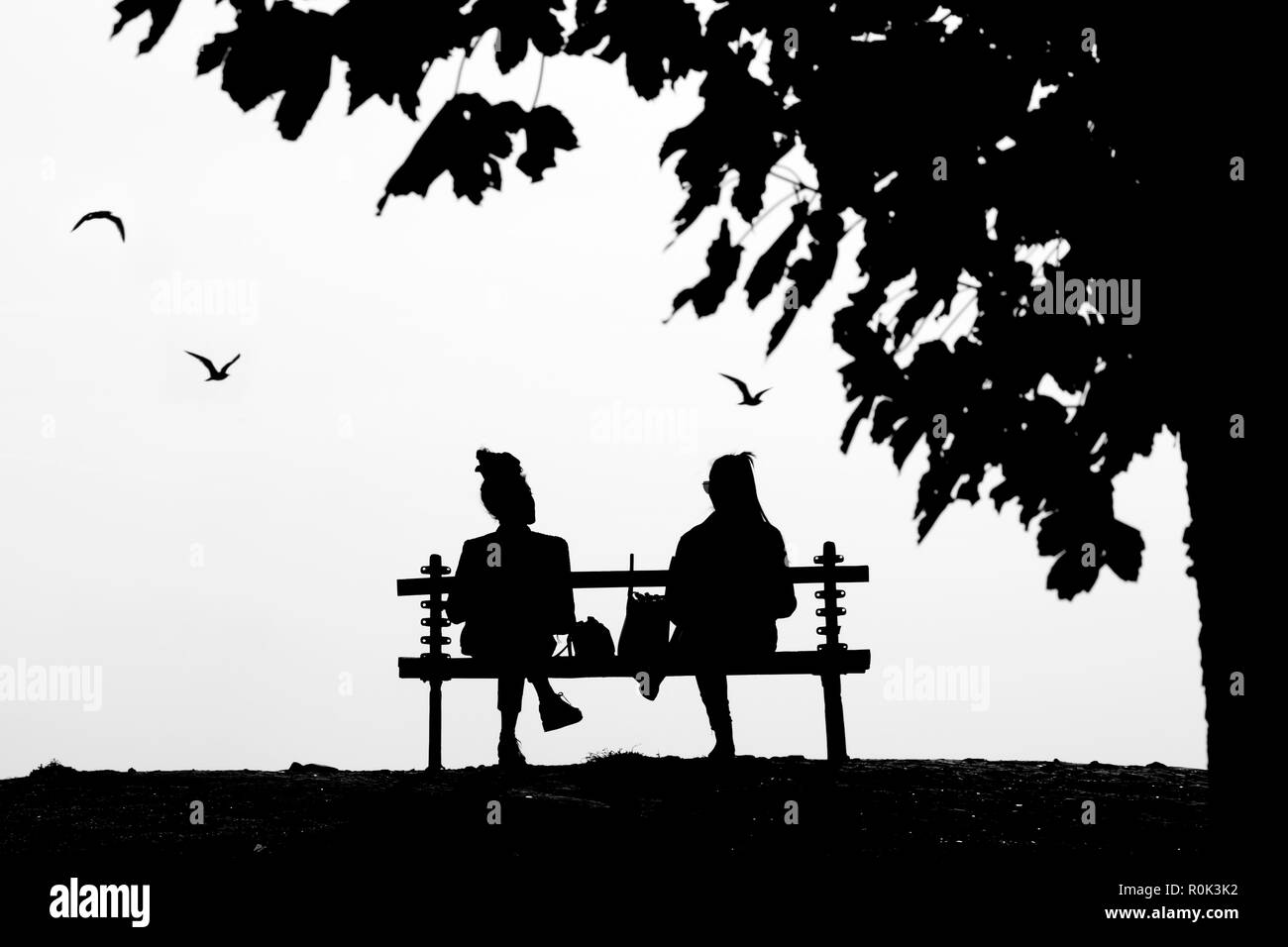 Two young female friends talking while sitting on an isolated park bench under the tree in high cobtrast black and white Stock Photo