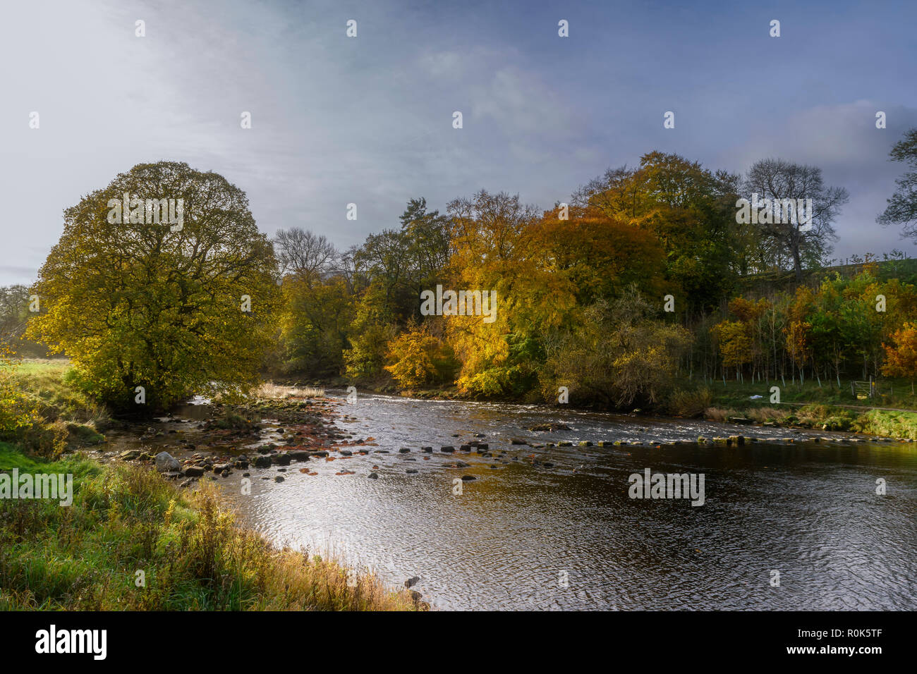 Stepping stones across the River Wharfe near Hebden in the Yorkshire Dales National Park in the autumn Stock Photo