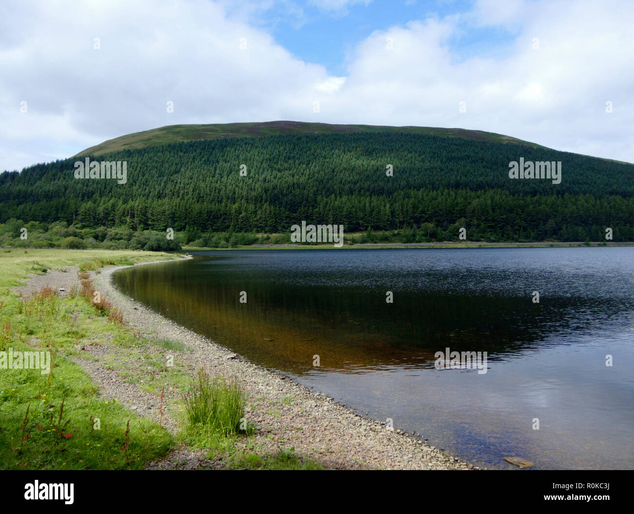 Loch of the Lowes & Oxcleuch Rig Hill and Long Bank Plantation, Southern Upland Hills, Upper Yarrow Valley, Borders County, Scotland, UK in August - Stock Image