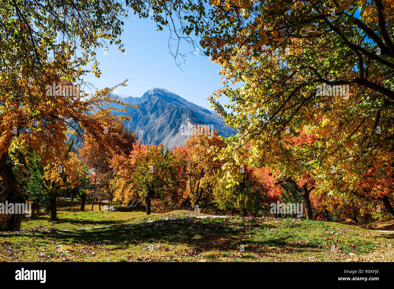 Colorful trees in autumn, Altit royal garden, Gilgit-Baltistan, Pakistan. - Stock Image