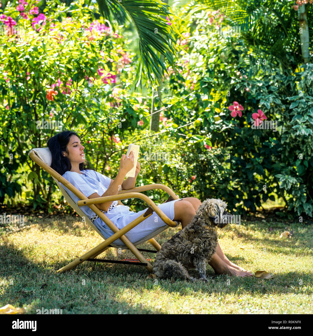 Young woman sitting in deck chair and reading a book, dog, tropical garden, Guadeloupe, French West Indies, Stock Photo