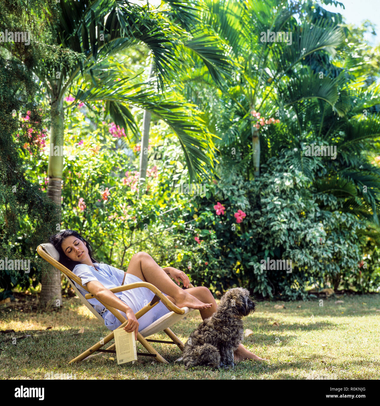 Young woman napping in deck chair, dog, tropical garden, Guadeloupe, French West Indies, - Stock Image