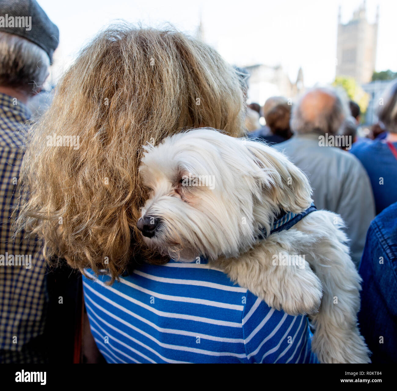 Woman With Maltese Terrier Dog London UK - Stock Image