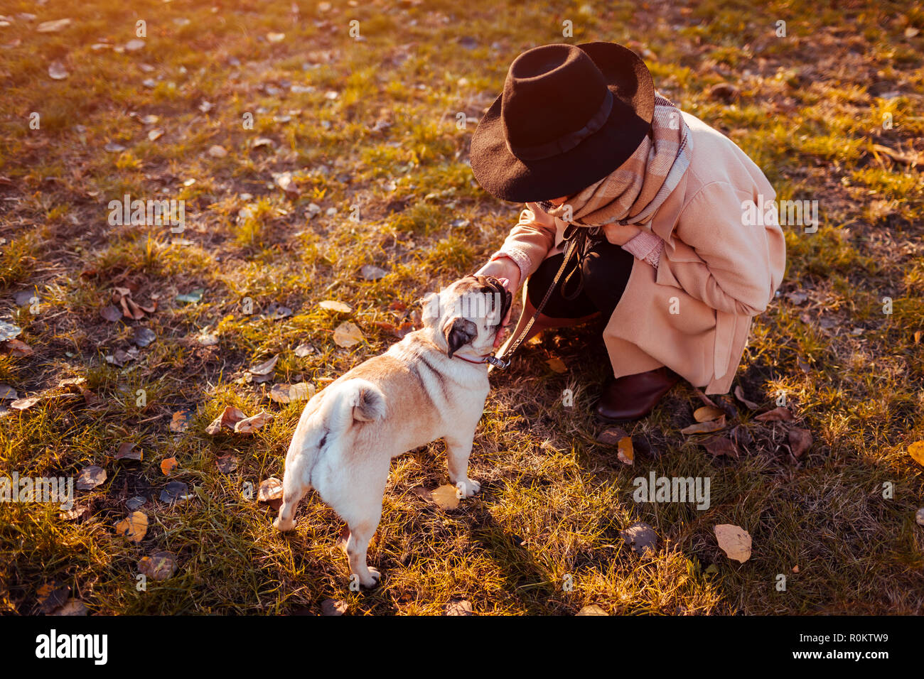 Master walking pug dog in autumn park. Woman petting puppy. - Stock Image