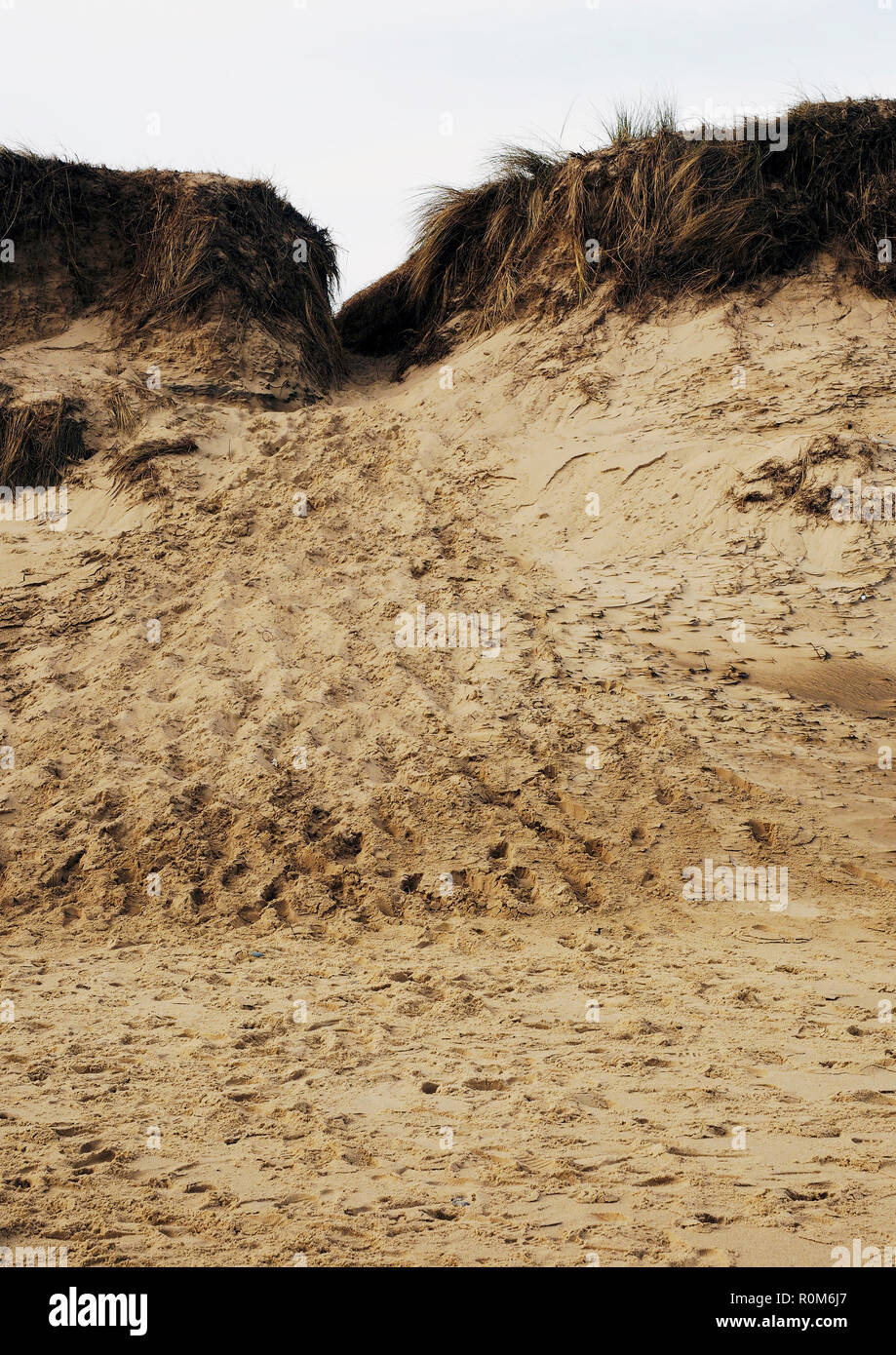 Serious erosion in sand dunes at Winterton, Norfolk caused by people taking a short-cut to the beach destabilises and weakens the dunes. - Stock Image