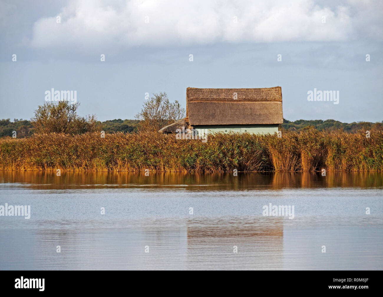 A typical Broadland wooden boathouse with thatched roof in the marshy reed beds at Horsey Mere, one of the famed Norfolk Broads seen in autumn sunshin. Stock Photo
