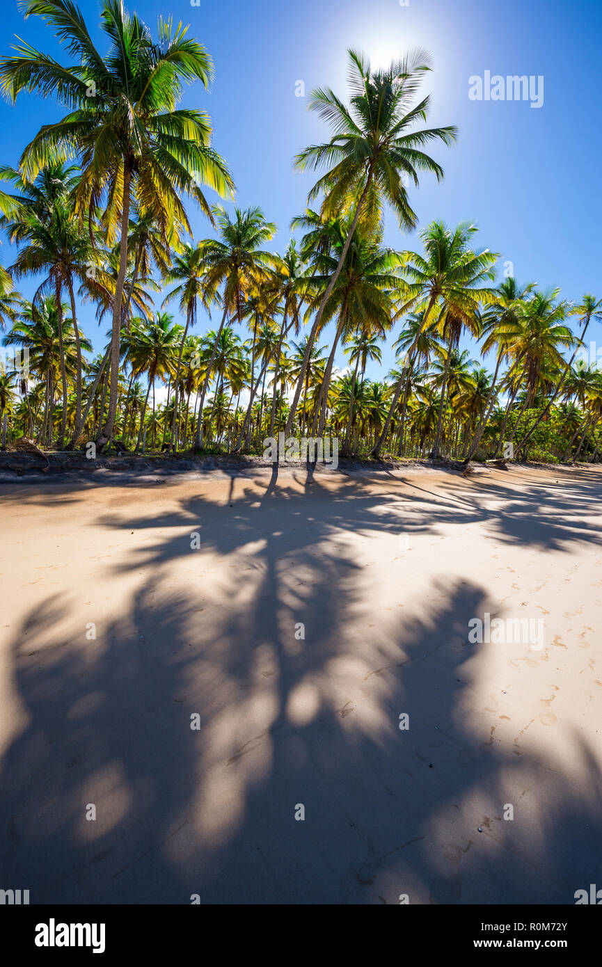 Dramatic backlit view of empty tropical palm-fringed beach with long shadows on smooth sand - Stock Image