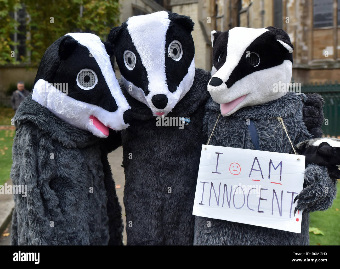 Westminster, London, UK. 6th November 2018. Westminster Demo against the Badger Cull to coincide with MP Chris Williamson's debate in Parliament. Credit: Matthew Chattle/Alamy Live News - Stock Image
