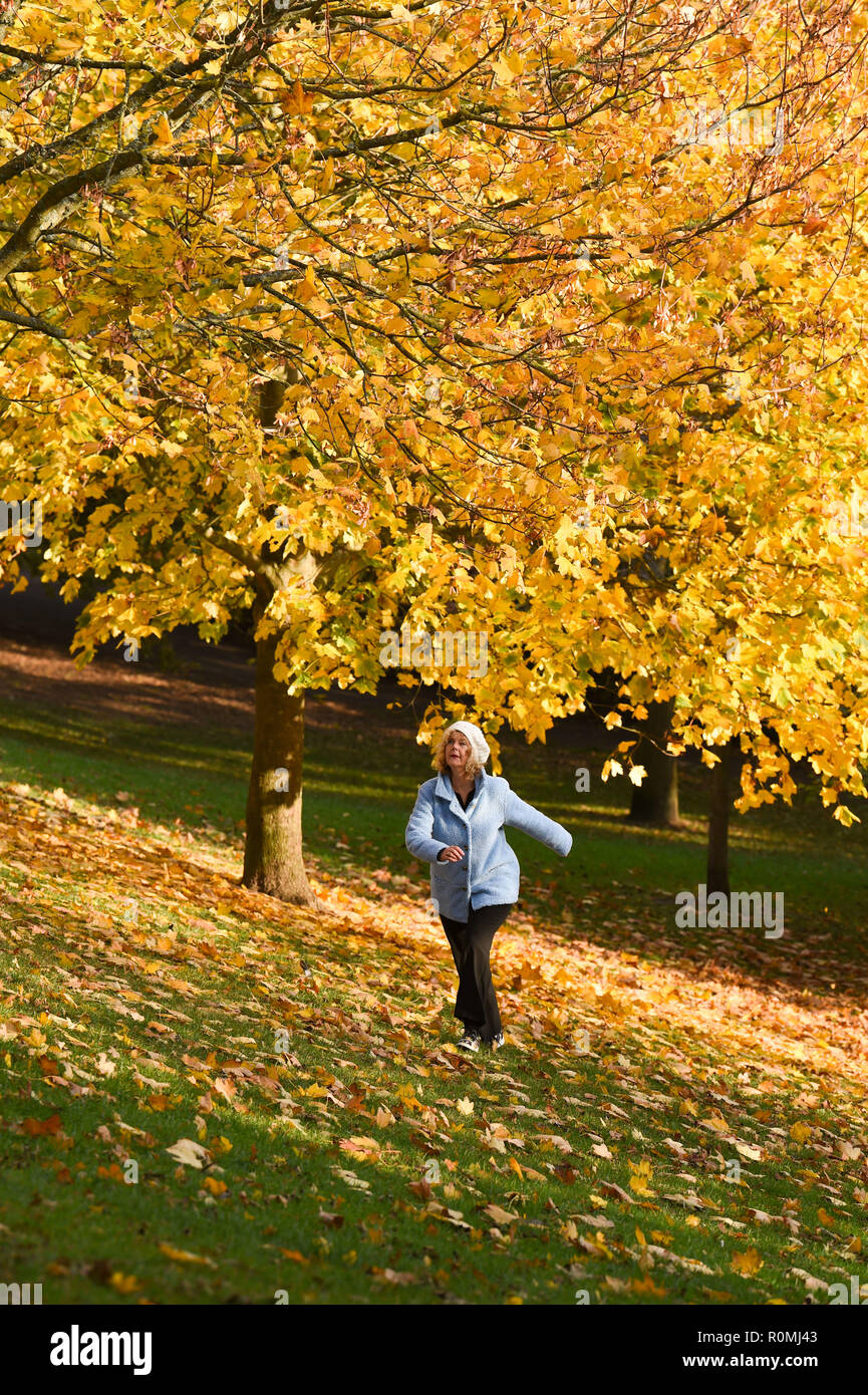 Brighton UK 6th November 2018 - A walker enjoys a stroll through the colourful Autumn leaves in Queens Park Brighton on a beautiful warm sunny afternoon Credit: Simon Dack/Alamy Live News Stock Photo