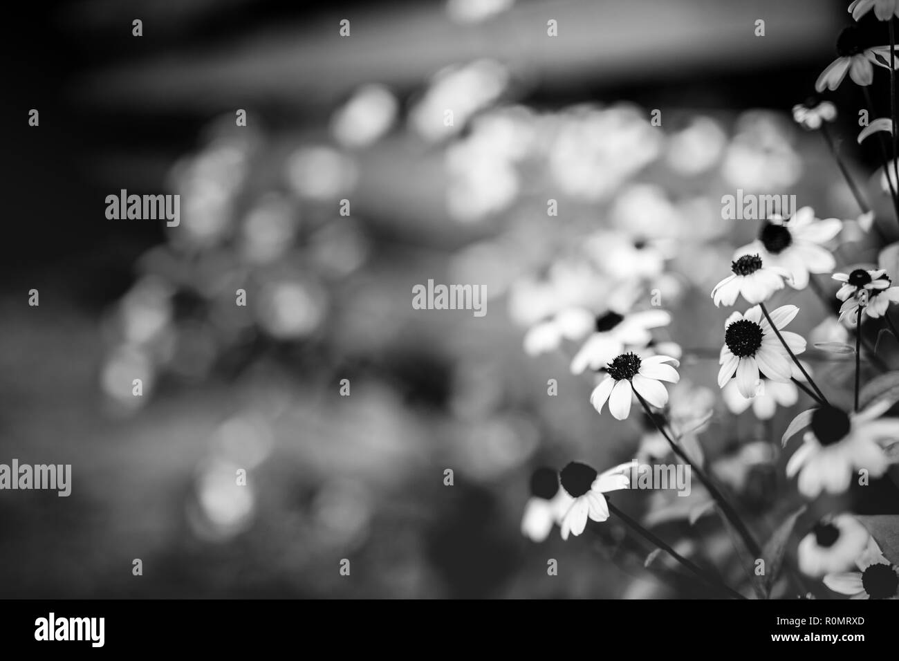 Beautiful small flowers on blurred background, nature seasonal concept. Blurred bokeh background and blooming yellow flowers - Stock Image
