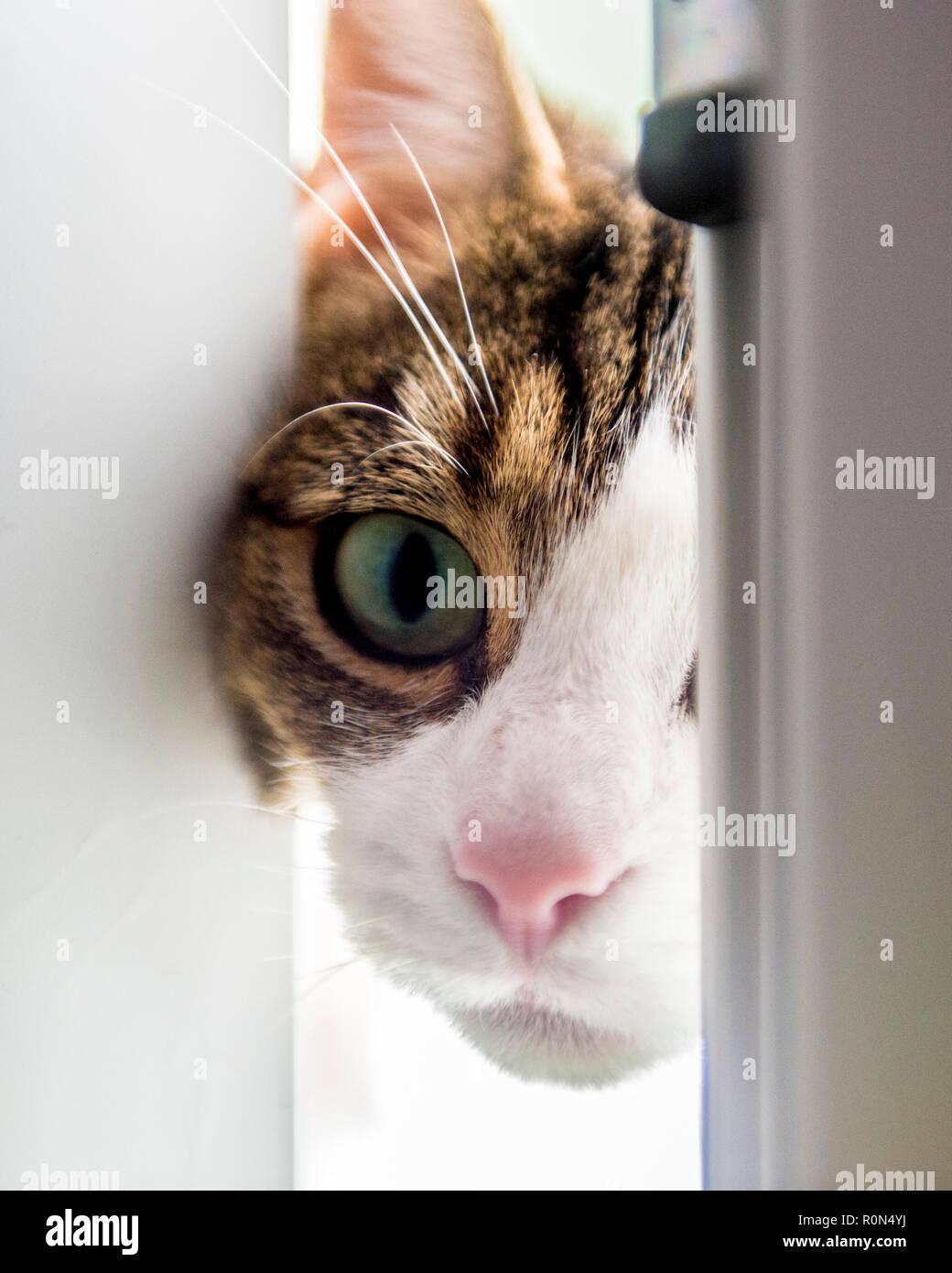 curious cat looking through door Stock Photo