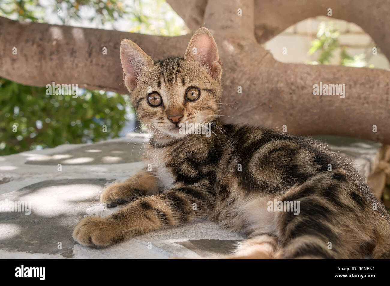 Cute baby kitten, classic brown tabby, resting on a wall, looking with wide eyes, Aegean  island, Greece, Europe - Stock Image