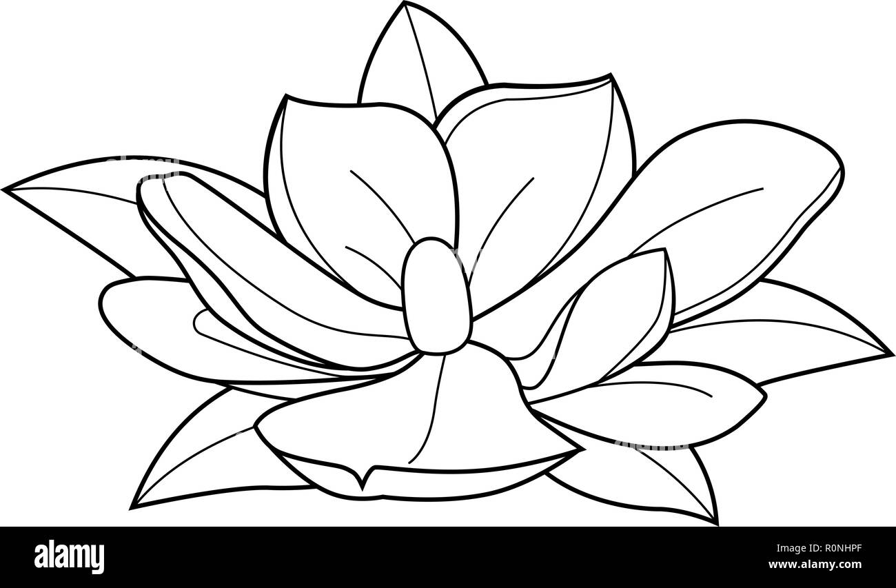 Vector Illustration Of A Magnolia Flower Black And White Vector