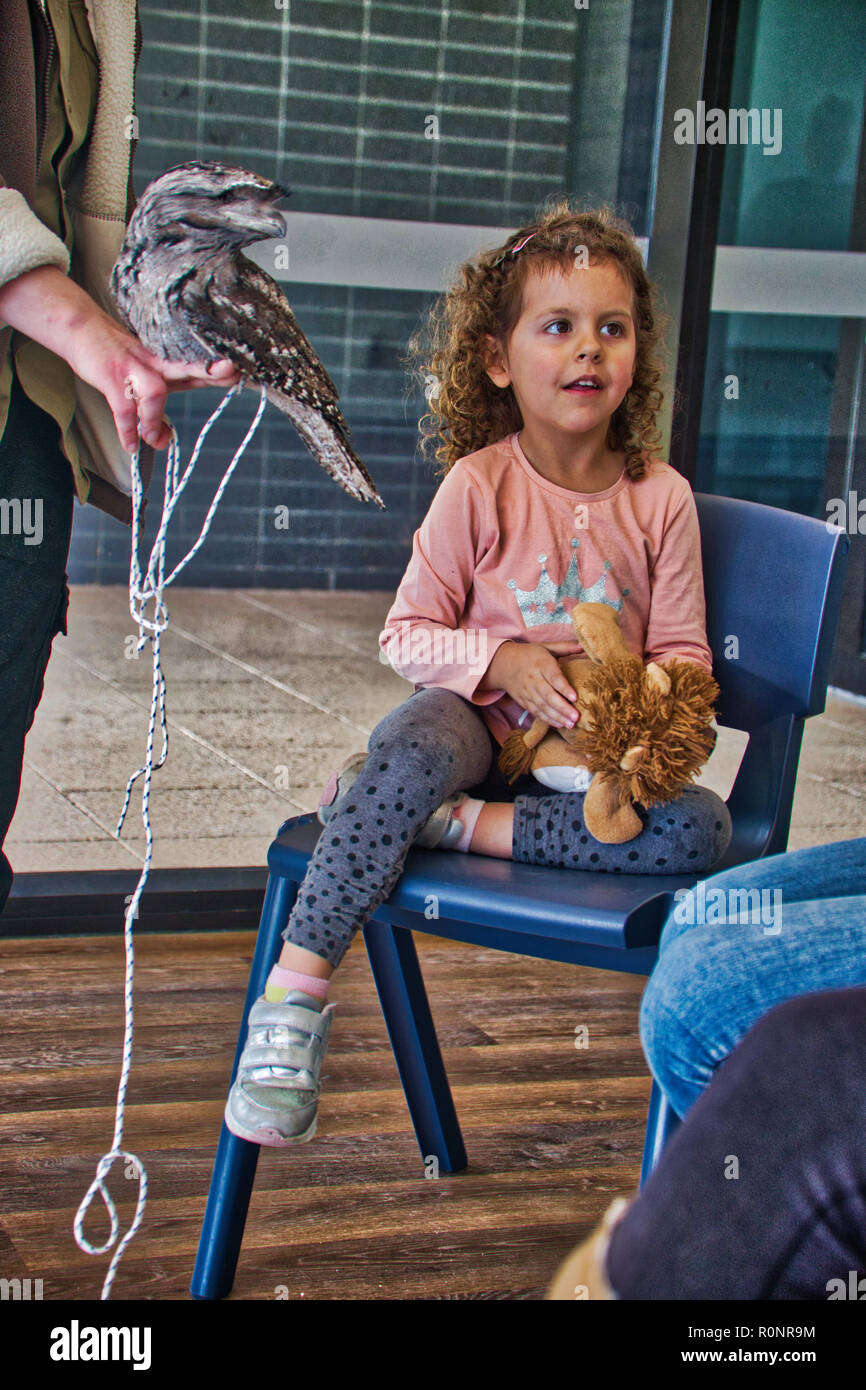 Girl child wants reassurance about frogmouth - Stock Image