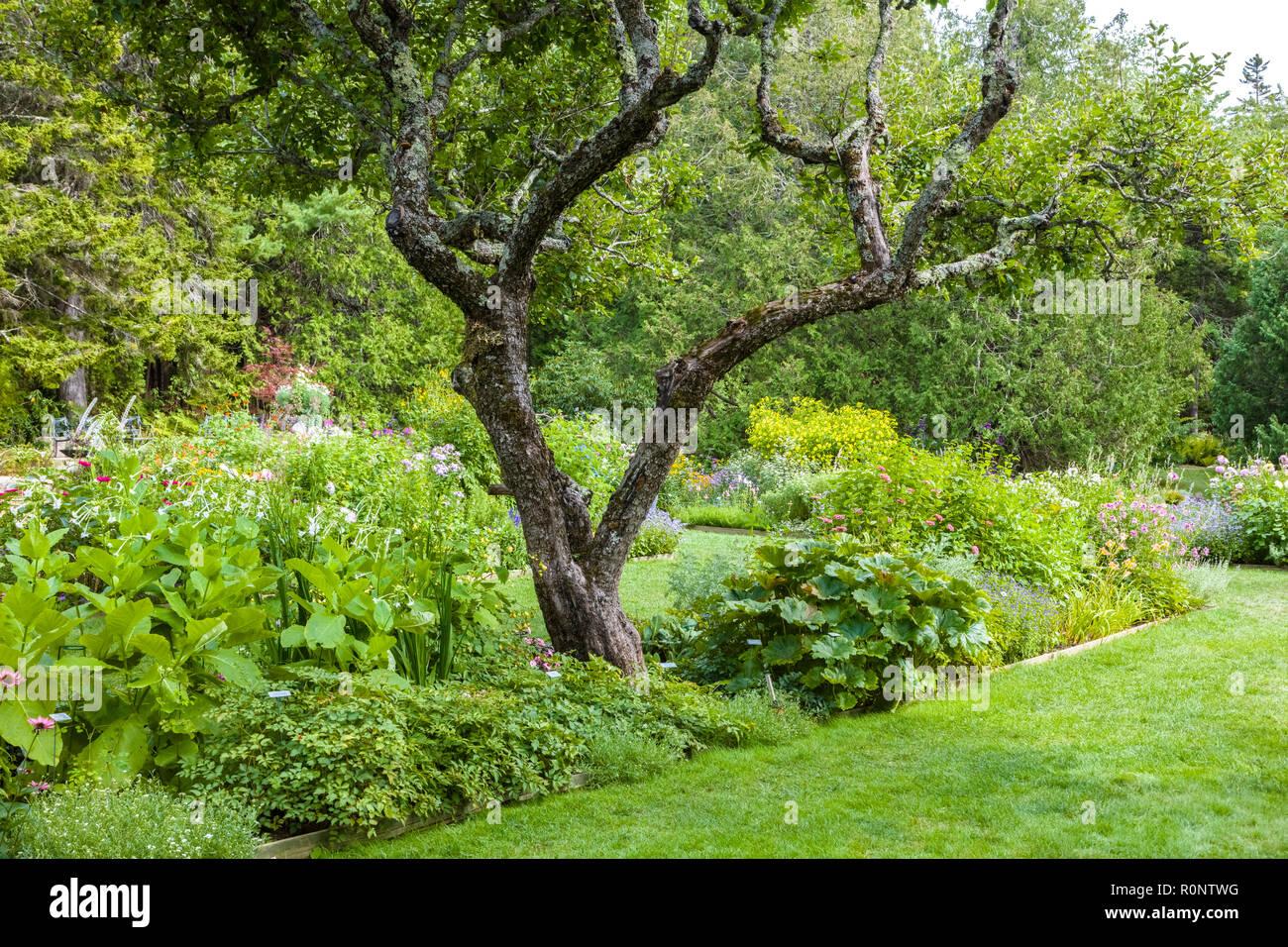 Thuya Garden in Northeast Harbor on Mount Desert Island in Maine, United States - Stock Image