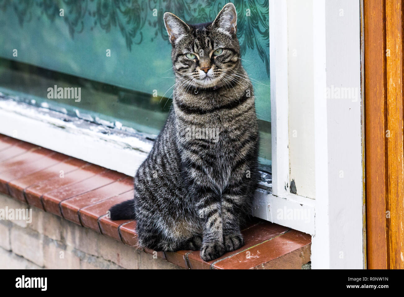 A beautiful cat sitting on a small ledge near the window posing for the camera. - Stock Image