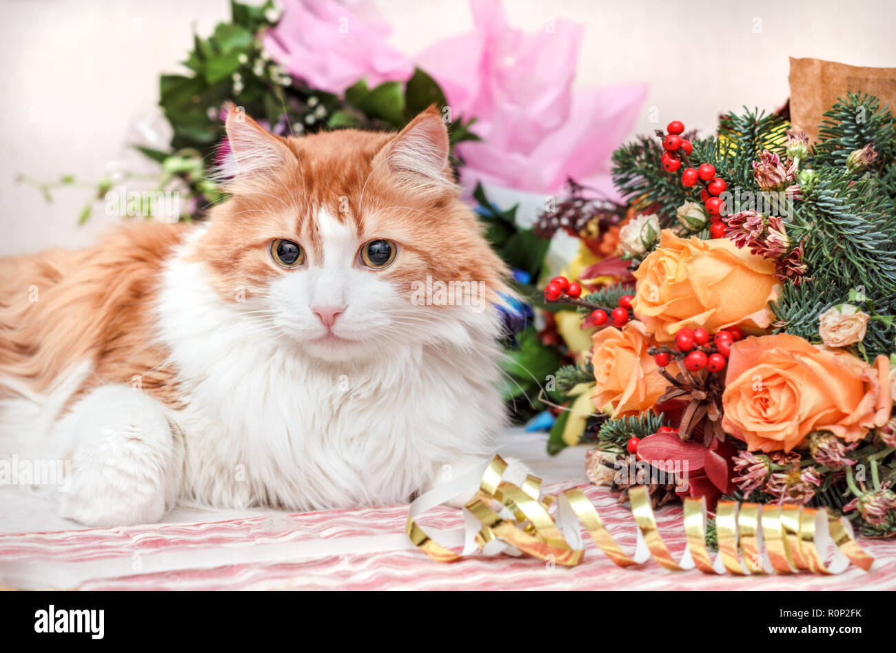 Luxurious aduly red cat and big New Year bouquet - Stock Image