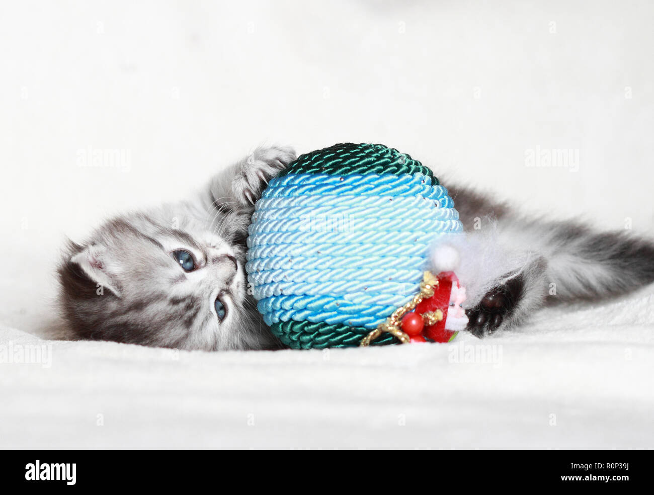 Nice puppy cat in Christmas time, playing with a ball - Stock Image